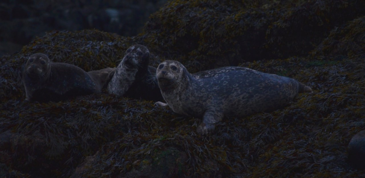 02 Early morning harbor seals.jpg