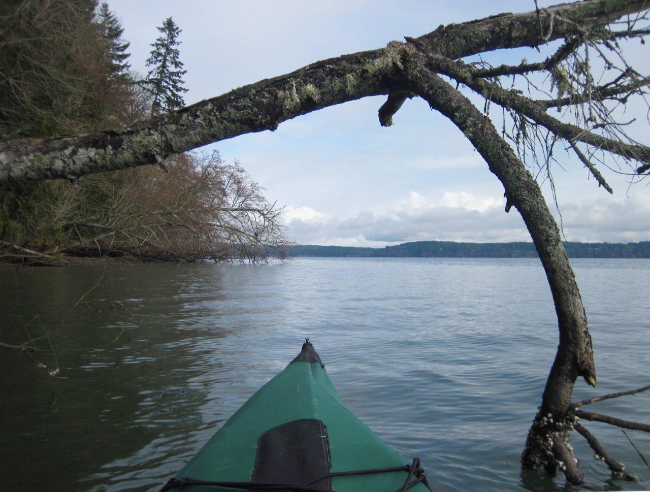 03 Overhanging tree.JPG