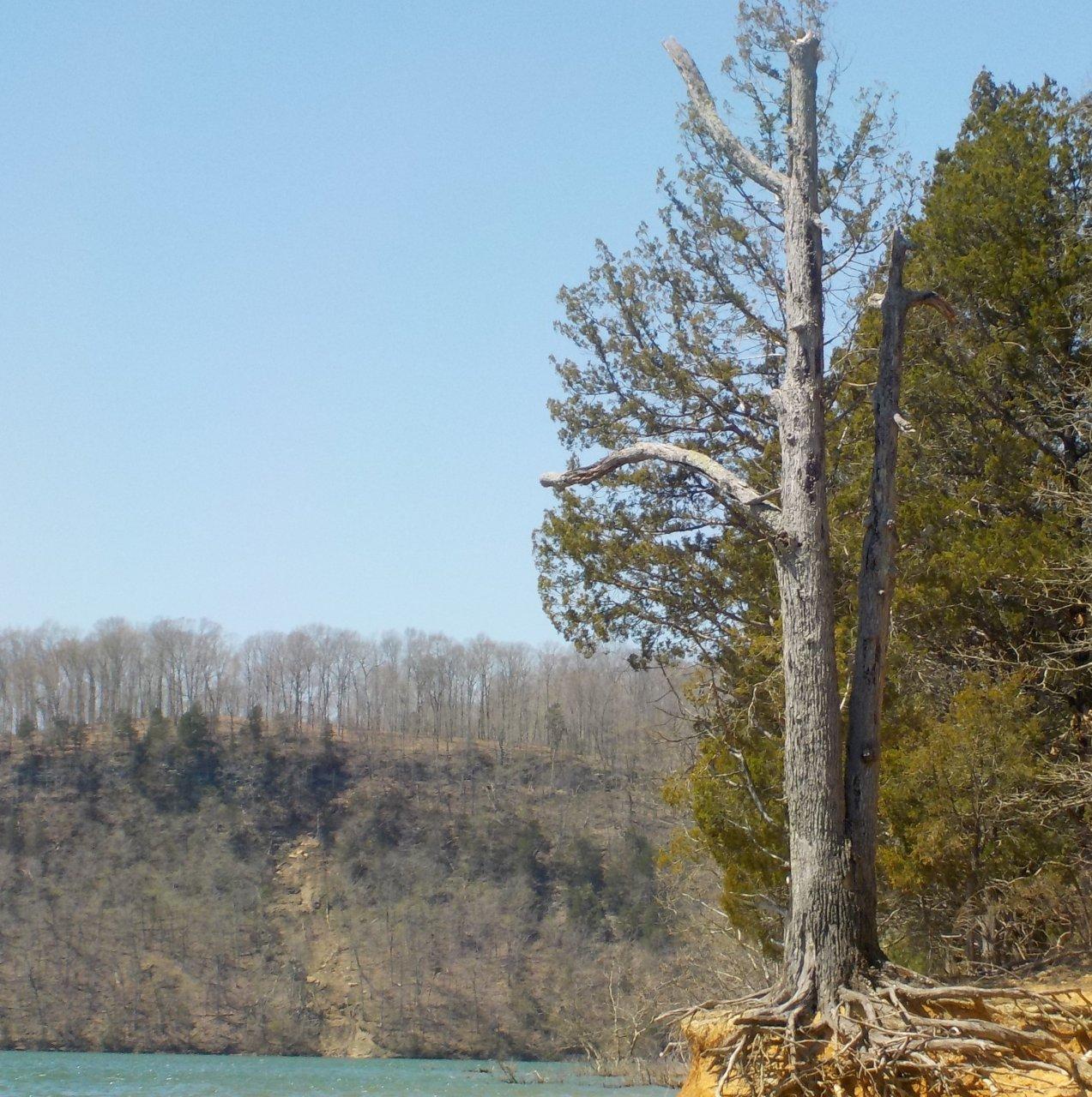 3-tree.JPG