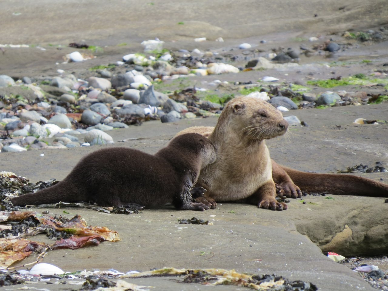 River Otter Mom and Babe.jpg