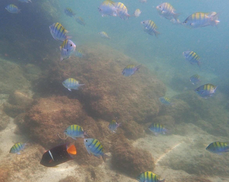 snorkeling-schooloffish.JPG