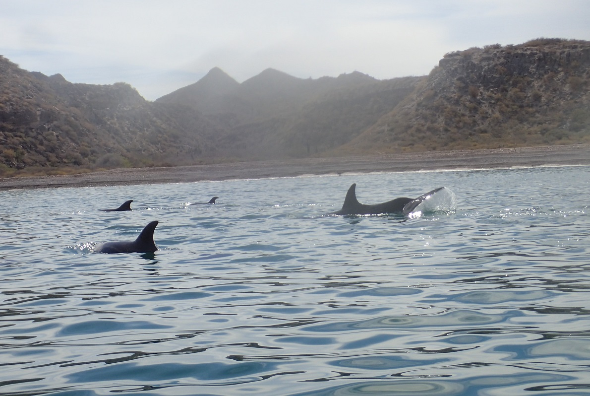 water-dolphins.JPG