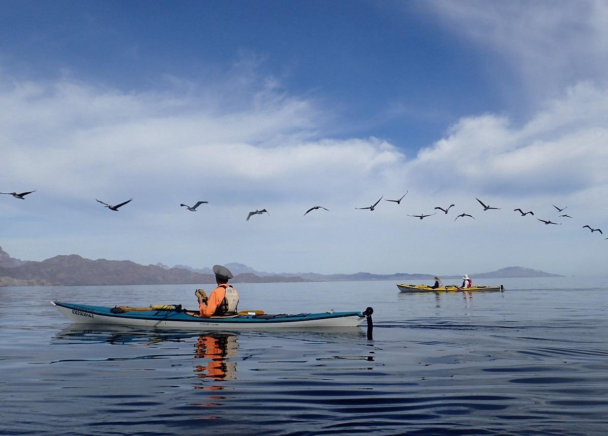 water-pelicanflyover.JPG