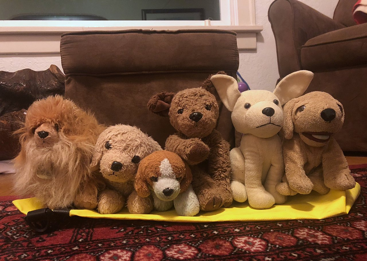 01 Dogs all lined up.jpg
