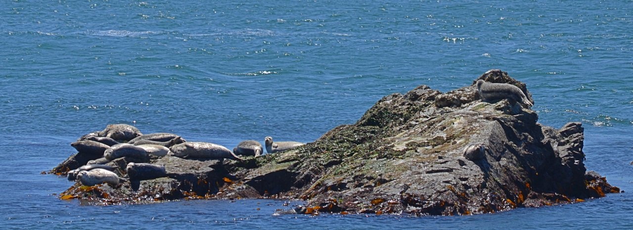 06 Seals relaxing on Lummi Rocks.JPG
