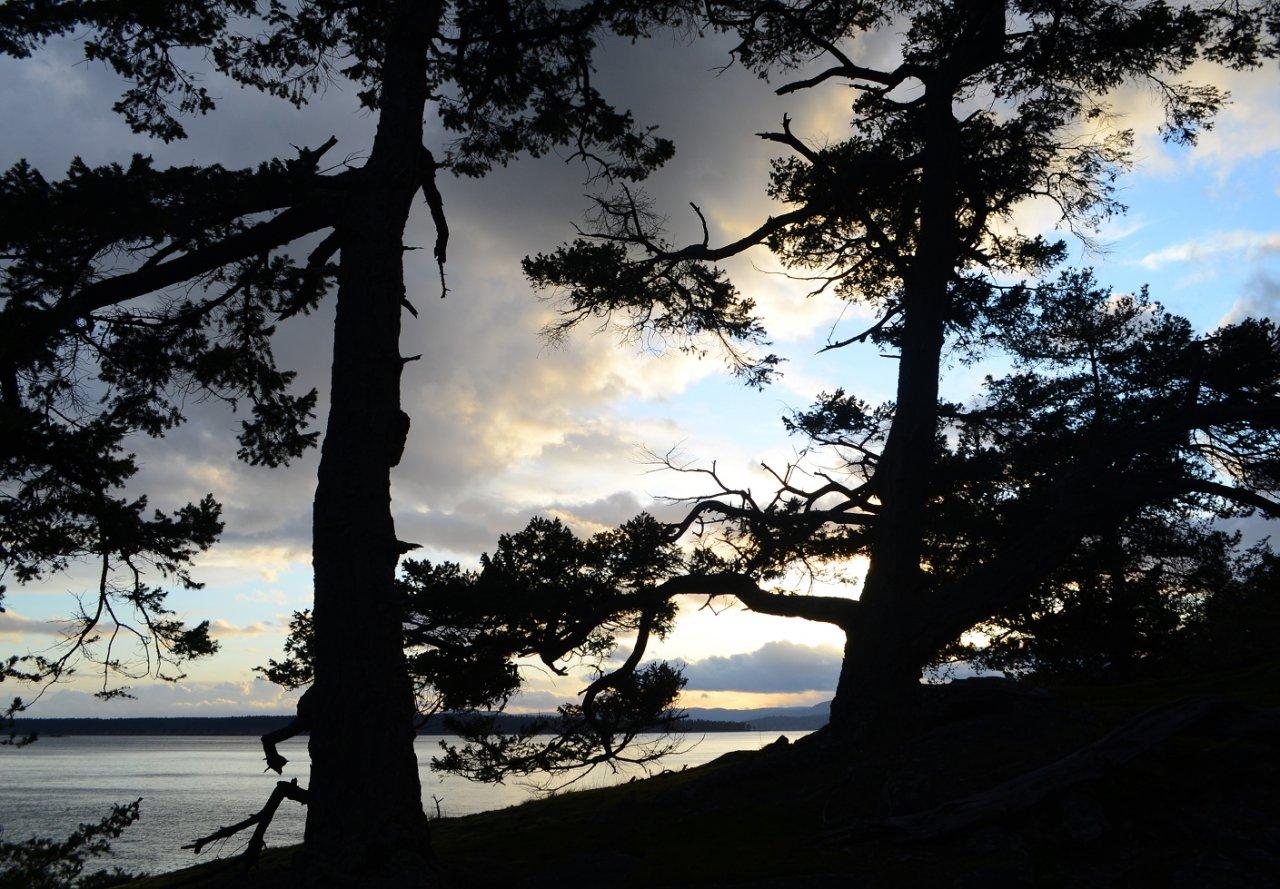 11 Silhouettes on Rum Island.JPG