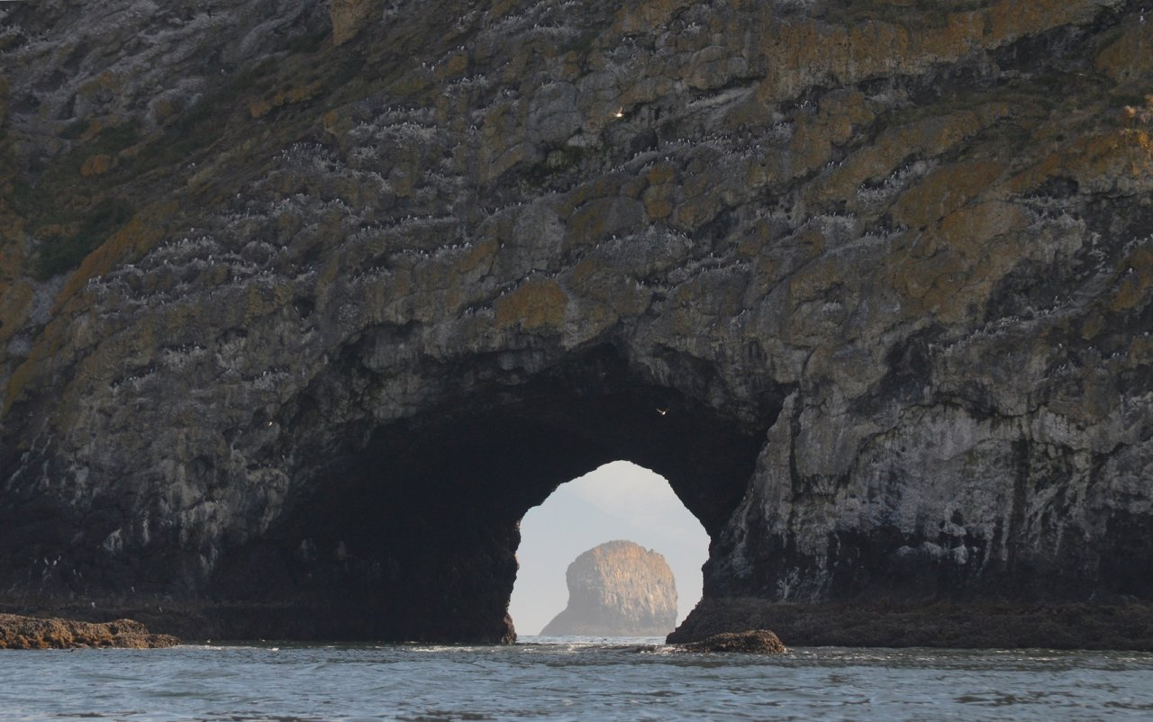 31 Finley Rock tunnel and nesting murres.JPG