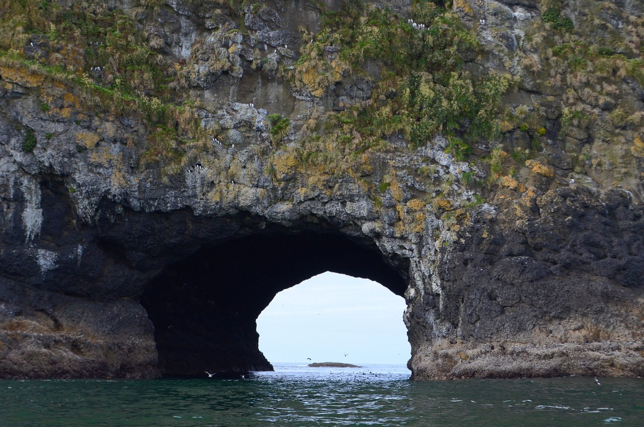 34 Tunnel with murres.JPG