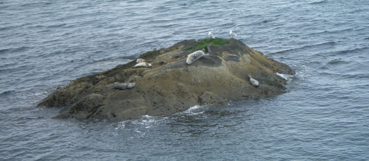IMGP0479 sleeping seals resized.jpg