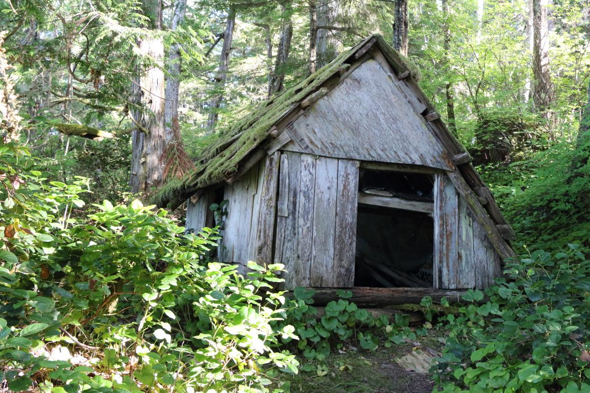 mouldy cabin resized.jpg