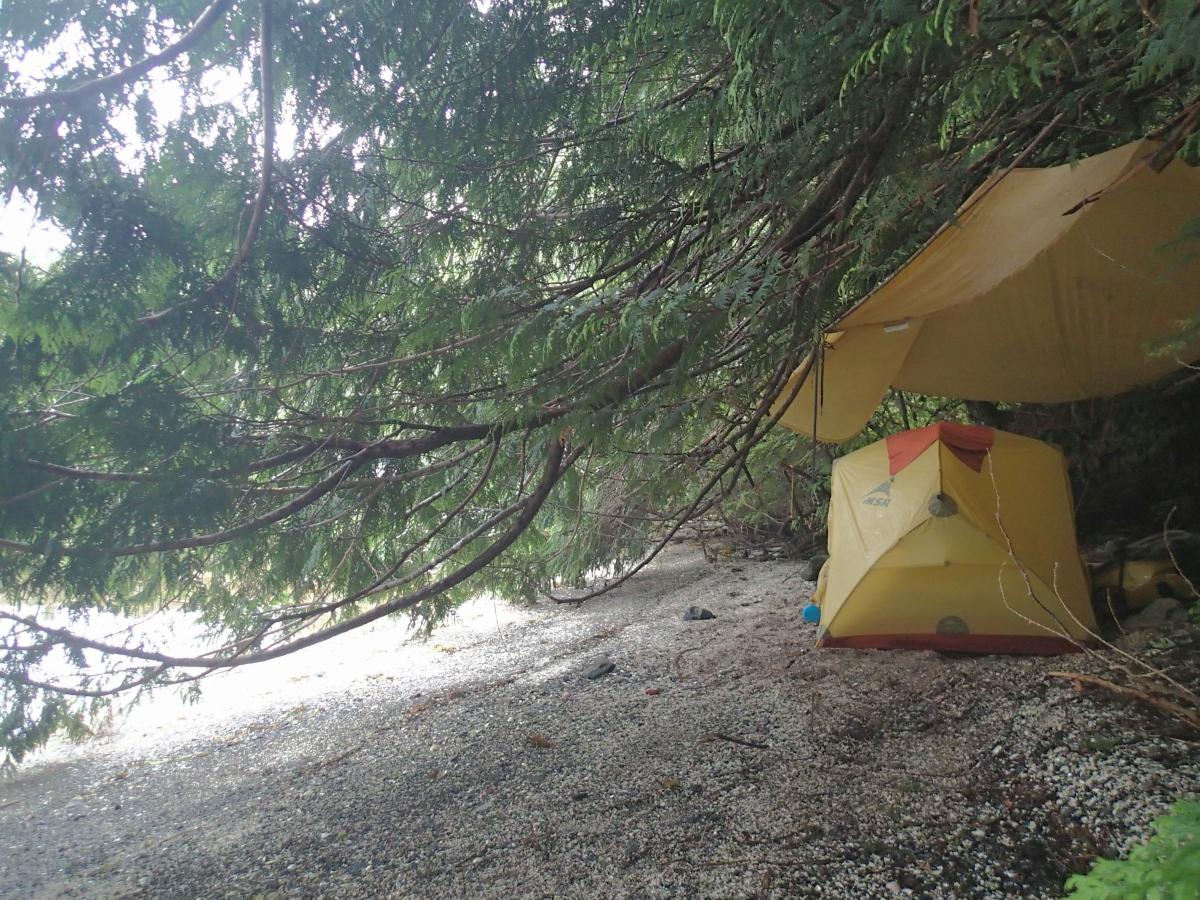 under the trees at Goldstream Harbour resized.jpg